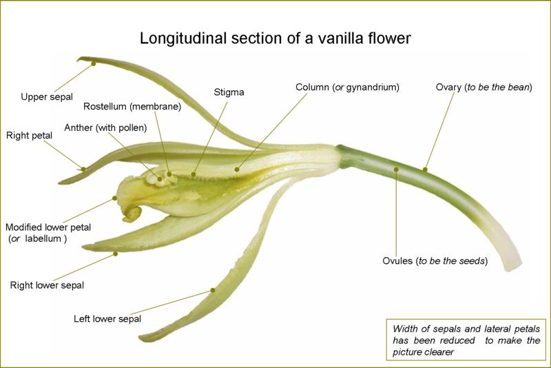 Vanilla ;)