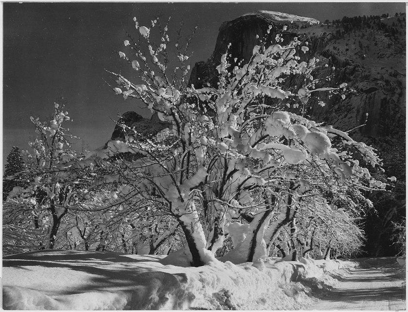 Ansel Adams-Half Dome, Apple Orchard, Yosemite