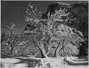 English: Ansel Adams: Half Dome, Apple Orchard...