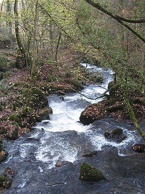 The River Kennall in Roches Wood The energy of...