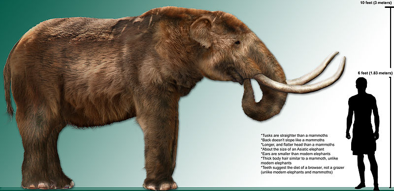 File:High res mastodon rendering.jpg