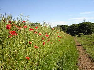 Wild Flower Meadow near Mixbury. Situated besi...
