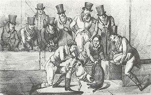 Title: Badger Baiting, London, circa 1824.