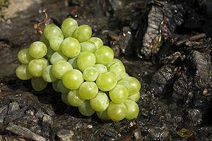 A green wine grape.