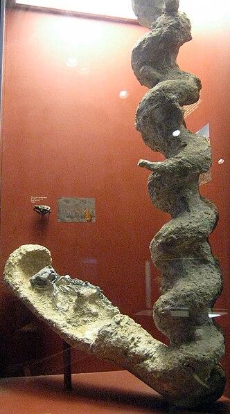 Palaeocastor Burrow