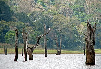 Periyar lake, Periyar National Park, Kerala, India