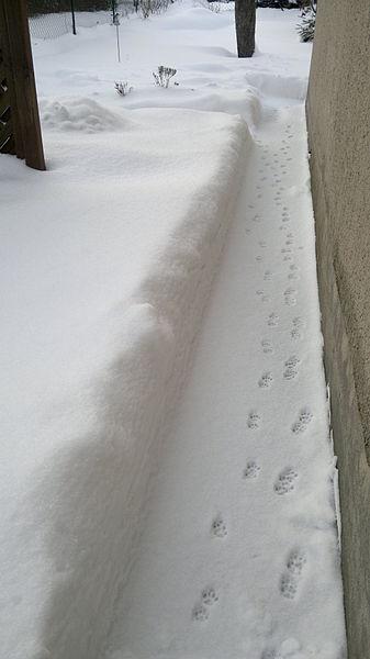 Datei:Spuren im Schnee 01.jpg