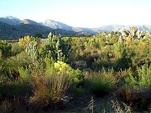 Fynbos, a floral kingdom unique to South Afric...