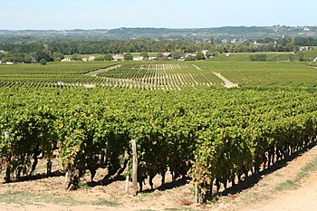 Vineyards in the French wine region of Bordeaux