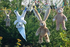 Teddys on a clothesline.