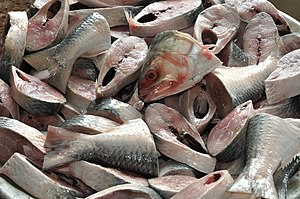 English: Hilsa (Bengali: Ilish) is the most po...