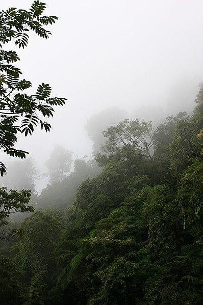 File:Bosque Comaltepec.JPG