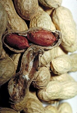 Peanut shells, with one split open revealing t...