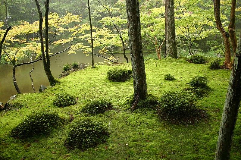 http://en.wikipedia.org/wiki/File:Saihouji-kokedera01.jpg