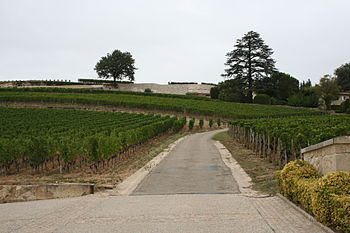 Vineyards in the French wine region of St Emil...