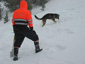 Nederlands: lawine training