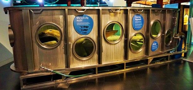 WA Maritime Museum - Joy of Museums - Megamouth Shark Tank