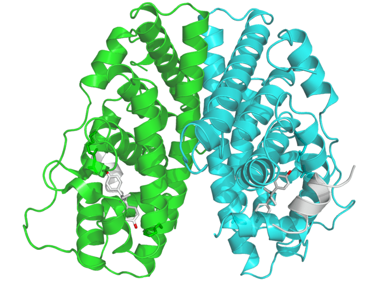 File:PBB Protein ESR1 image.png