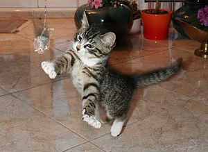 a young playing cat