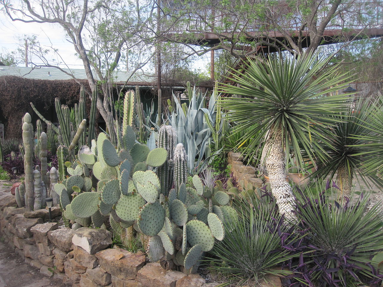 FileCactus Garden At River Pierce Foundation Office In