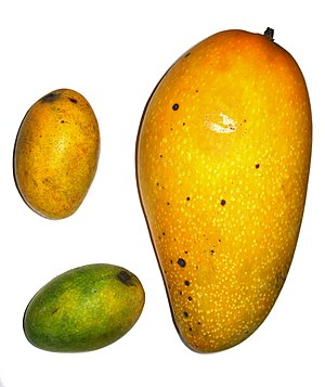 Example of Mangoes, shoot in Taipei, Taiwan. T...