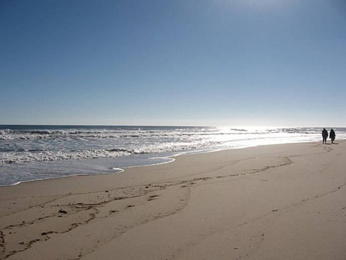 Newcomb Beach, Cape Cod