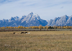 Horses in a dude ranch pature in Grand Teton N...