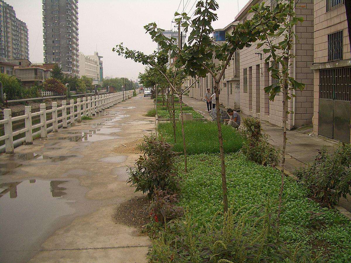 Backyard Landscape Garden