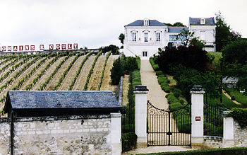 Vineyard near the French wine region of Chinon...
