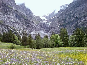 Meadow in full flower near Grindelwald in the ...