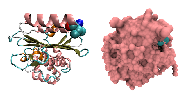 Beta-lactamase Citrobacter 3BFC.png by Ayacop on Wikimedia Commons http://commons.wikimedia.org/wiki/File:Beta-lactamase_Citrobacter_3BFC.png