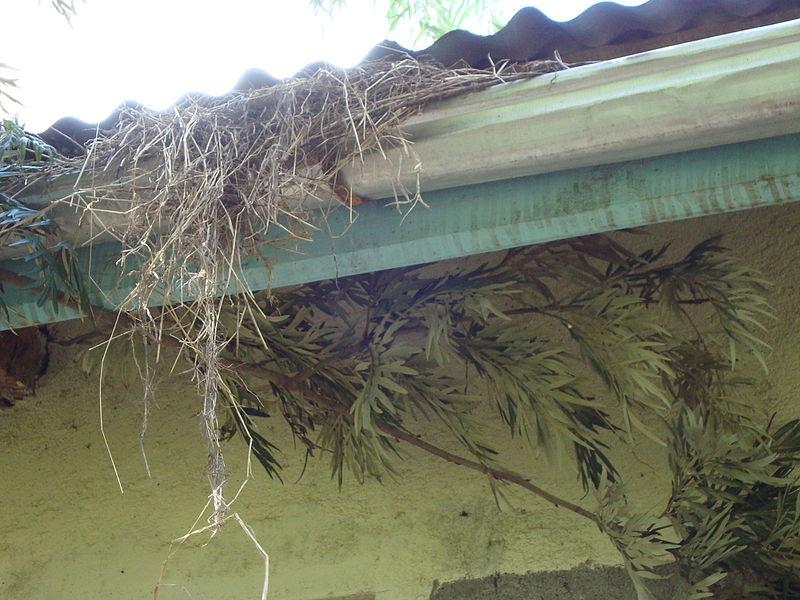 File:Blocked gutter for rainwater collection (5792322887).jpg