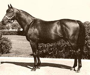 cavalli famosi | il fiero equino | Pagina 5