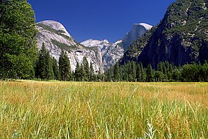 English: Yosemite Meadows – Half Dome in...