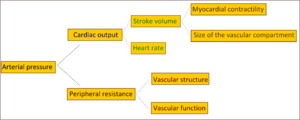 diagram explaining the physiology of arterial ...