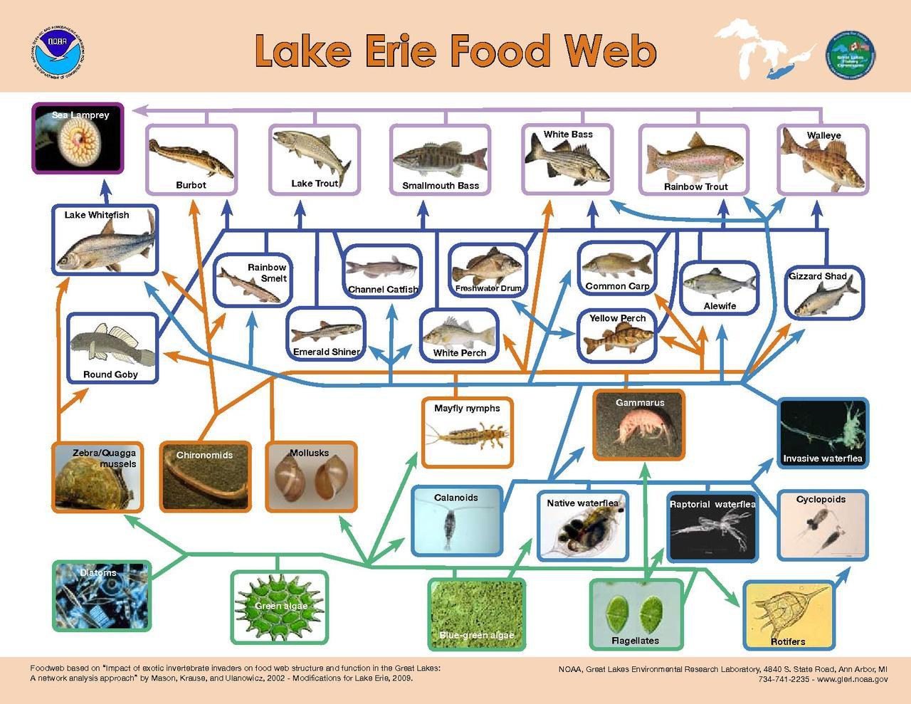 File Lake Erie Food Web