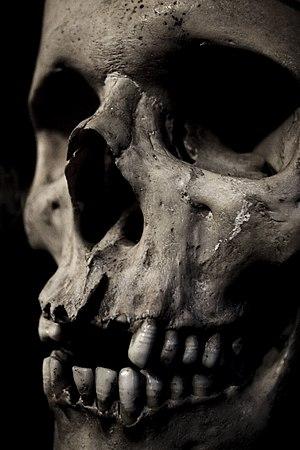 Closeup of a human skull.