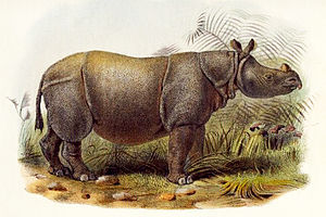 Female Indian Javan rhino imported by the anim...