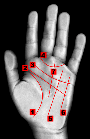 Some of the lines of the hand in Palmistry 1: ...