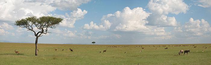 Sabana en Maasai Mara, Kenya.