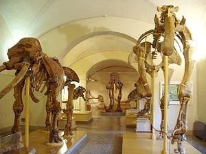 Museo di Storia Naturale di Firenze, Sezione d...