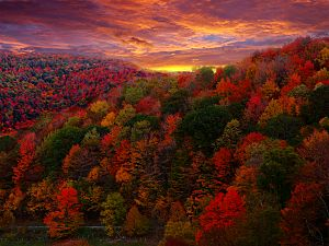 English: Fall Foliage Photography