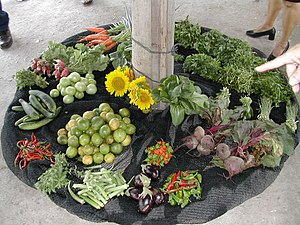 Produce grown at organic community garden in S...