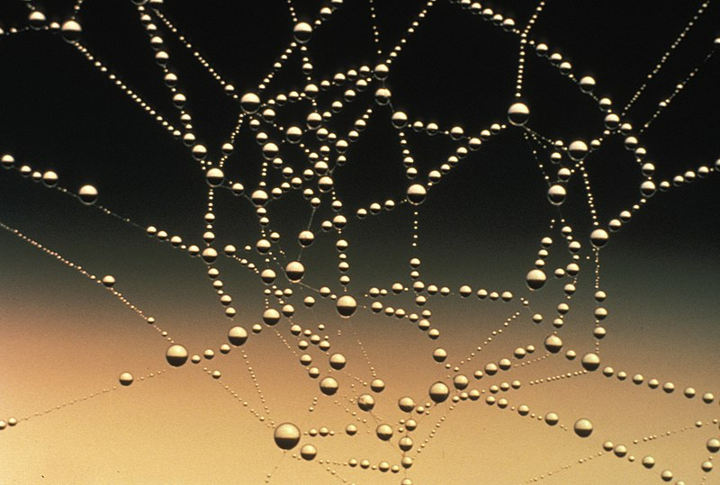 File:Water drops on spider web.jpg