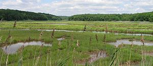 Marsh Bride Brook and Coastal Salt Marsh, East...