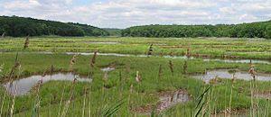Marsh Bride Brook and Coastal Salt Marsh, East...