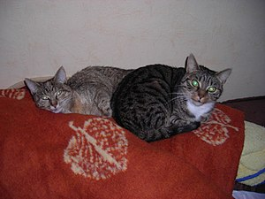 Two tabby cats waking up — one the right looks...