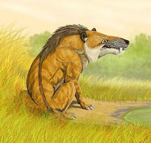 Características ungulados primitivos: Andrewsarchus (Mesoniquio)