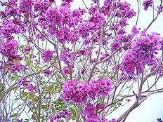 Flora t�pica do Agreste do estado