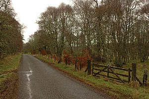 English: Road, birch trees and gate